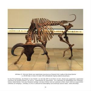Voreiszeitliches Auerochsen-Skelett