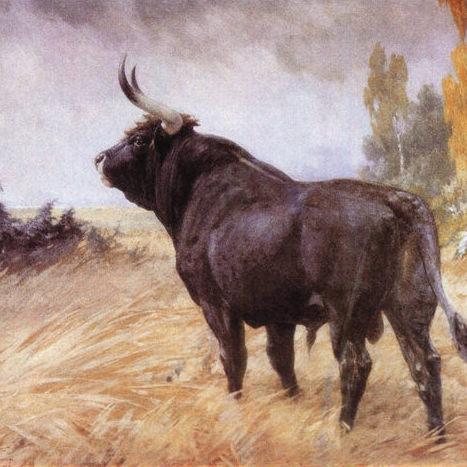 Gemälde eines Auerochsen